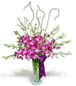 Orhidee...