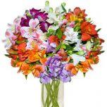 Flori de vara viu colorate