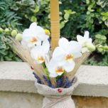 Lumanare botez cu orhidee si grau