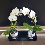 Orhidee PONTO