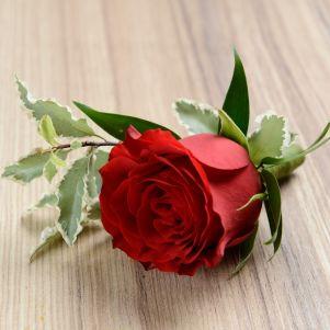 Cocarda trandafir