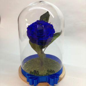 Trandafir criogenat albastru, in cupola