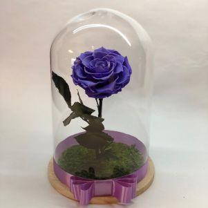 Trandafir criogenat mov, in cupola