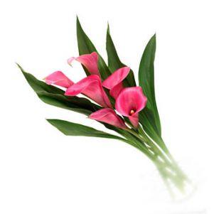 Buchet de cale roz