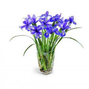 Simplu...iris