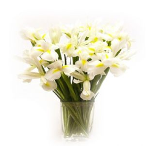 Flori albe de iris