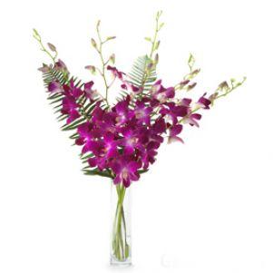 Orhidee violet