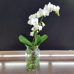 Orhidee Bahia Blanca