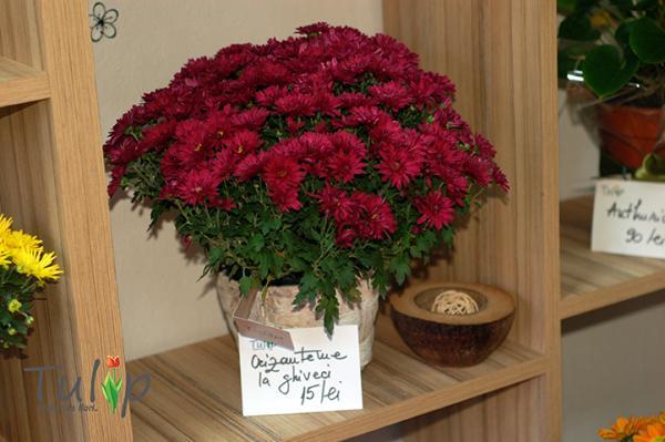 Trei plante hărnicuțe care ajută la purificarea aerului