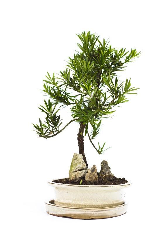 Reduceri de Green Friday la toate plantele la ghiveci