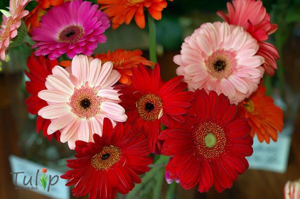 Florile-ți fac viața mai frumoasă
