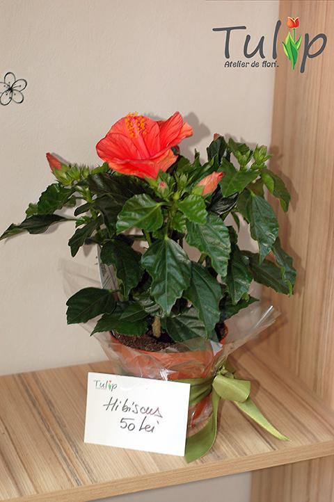 Despre plantele care au flori și iarna